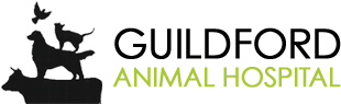 Veterinarians in Surrey | Guildford Animal Hospital